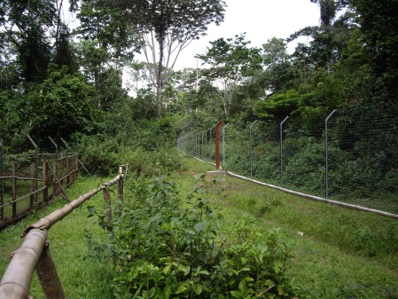 One time we went to a gorilla refuge. I thought it looked more like Jurassic Park.